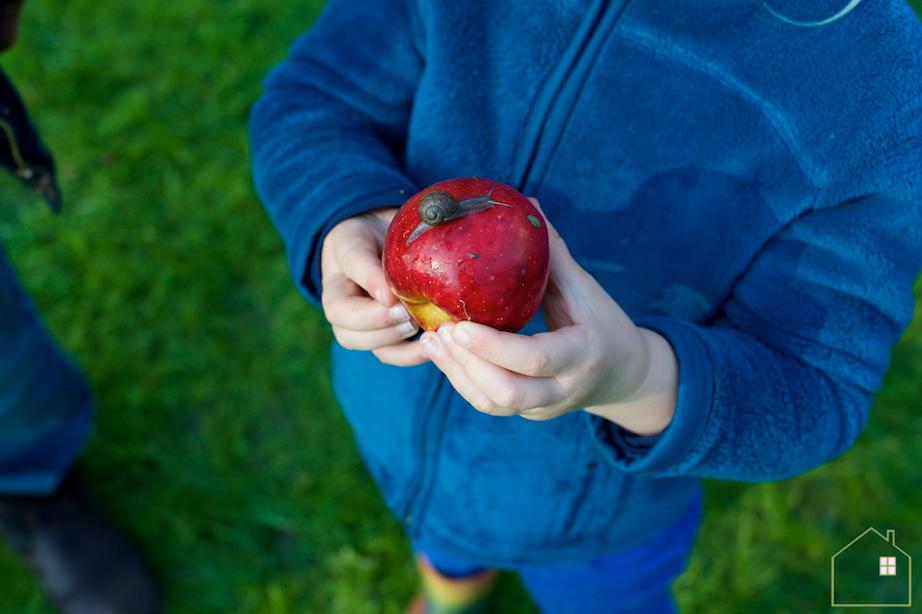 Appels plukken 5