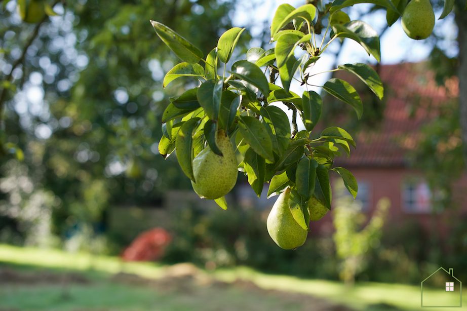 Appels plukken 7