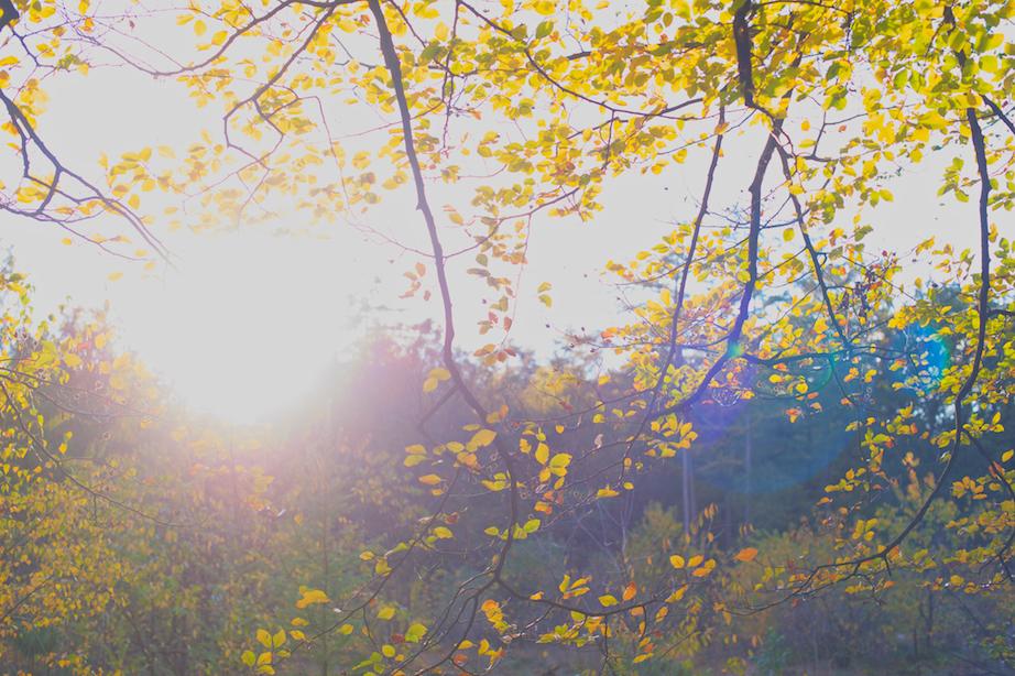 bos herfst