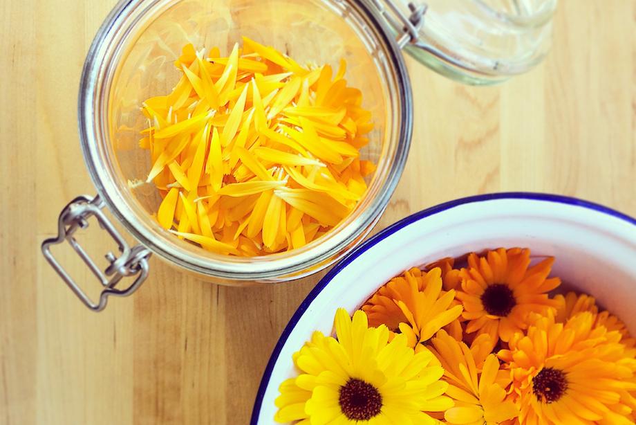goudsbloem calendula