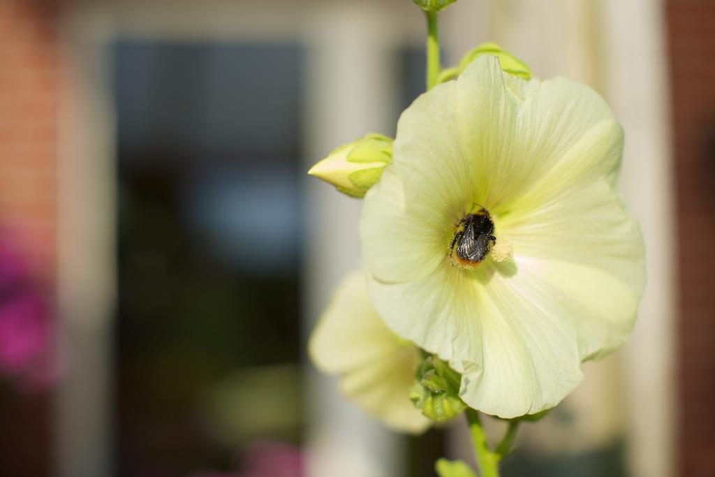 zomerbloemen 1