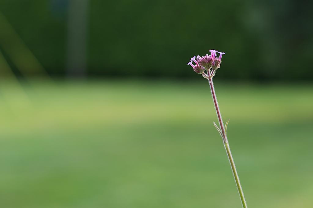 zomerbloemen 4