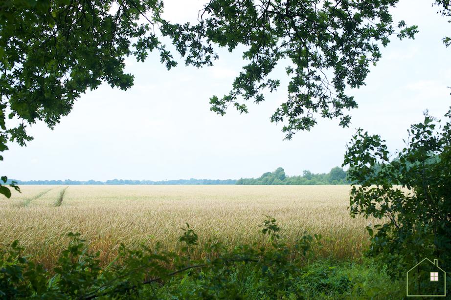 Drenthe graan