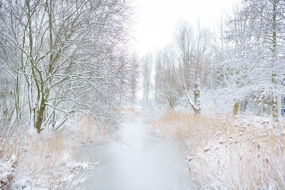 koning winter 2