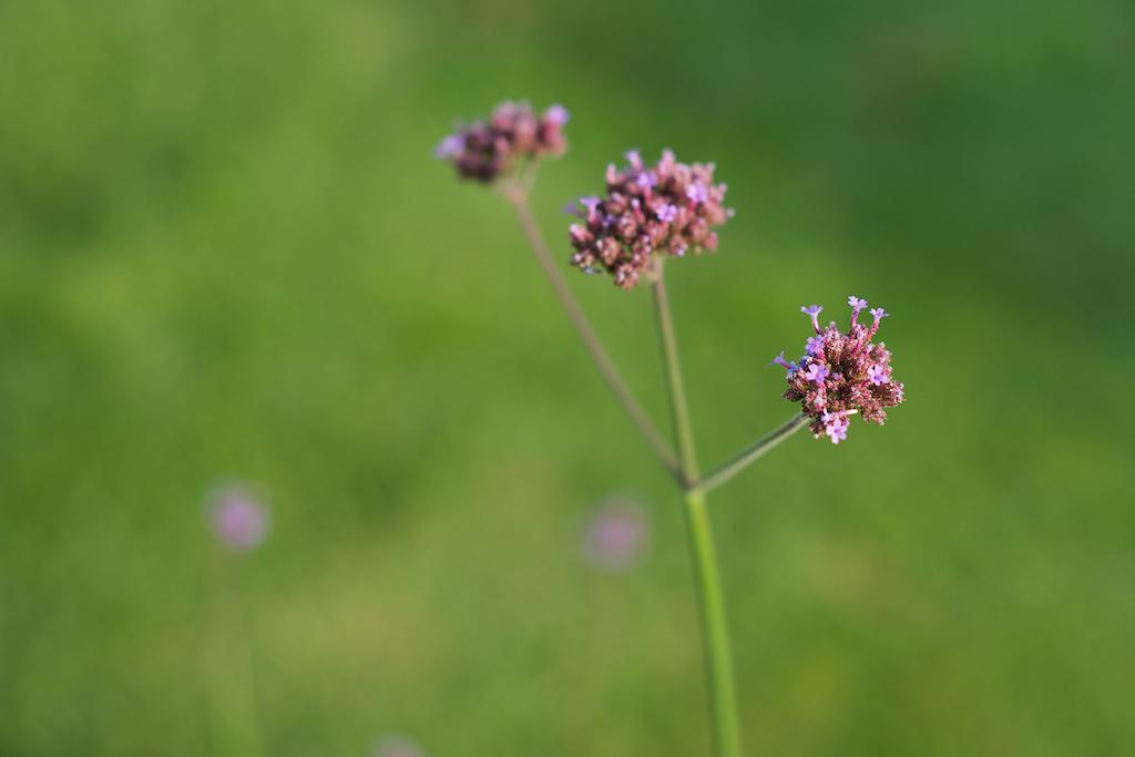 zomerbloemen 5