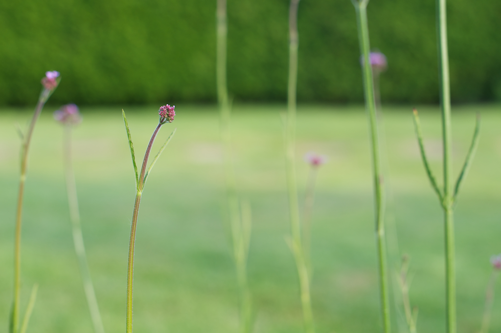 zomerbloemen 6